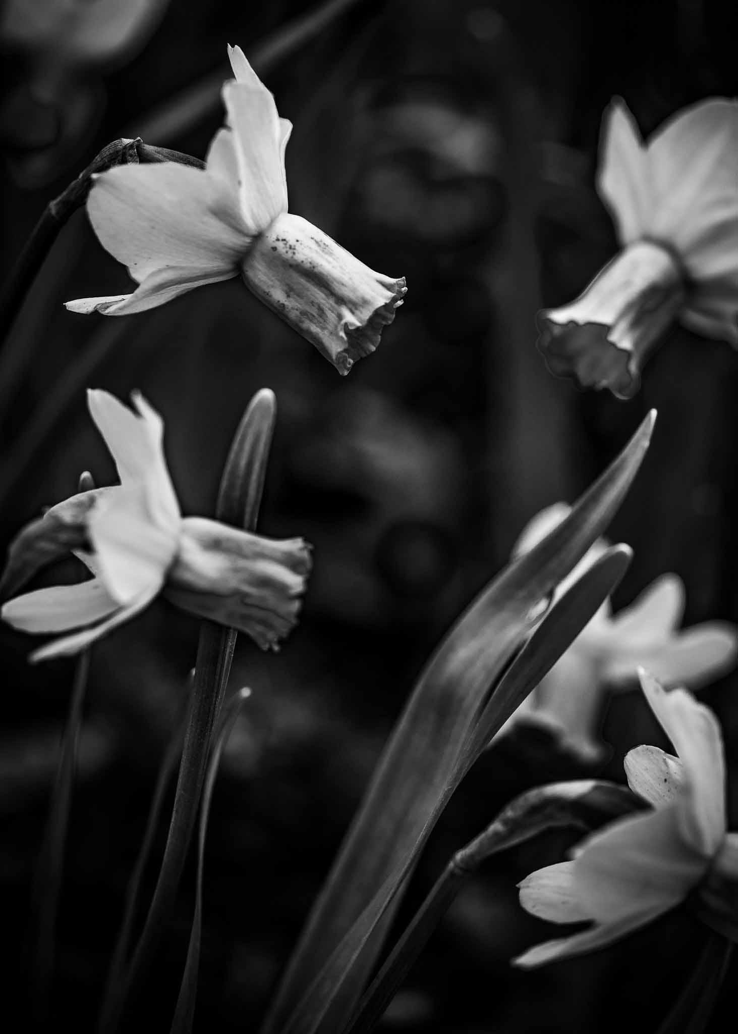 """jour 1 """"c'est bientot le printemps"""""""